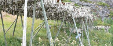 Lutefisk, Norvegia